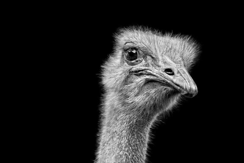 """""""Peckish"""""""