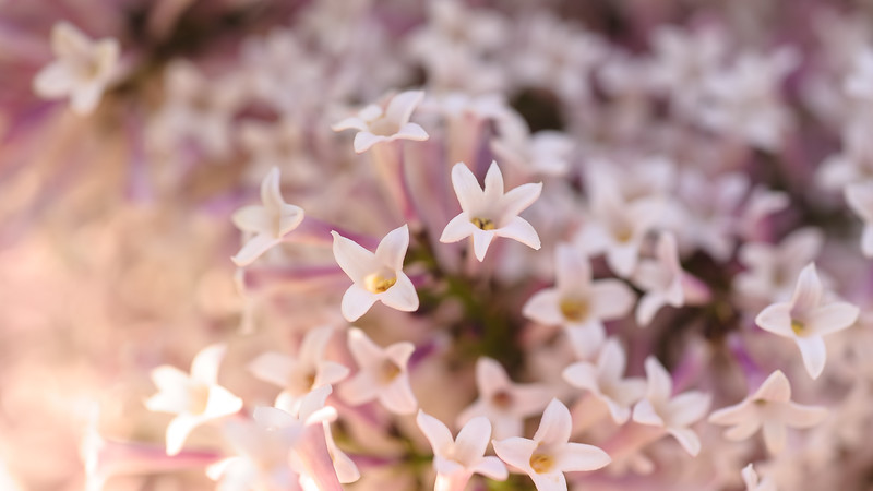 Final Days of the Lilac Flowers  http://photography.brianbillman.com/Featured/Plants-Animals/i-4SF22F4/A