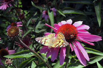Butterfly | Bar Harbor, Maine