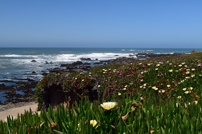 Pigeon Point State Park | California Coast