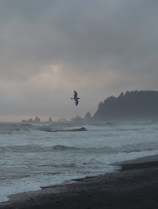 Rialto Beach | Olympic National Park
