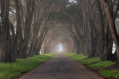Cypress Tree Tunnel | Point Reyes National Seashore