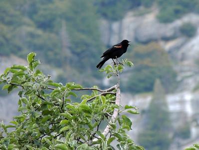Bird | Yosemite National Park