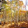 Aspen Grove UT