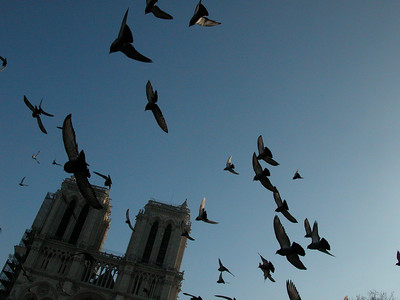 Doves over Notre-Dame