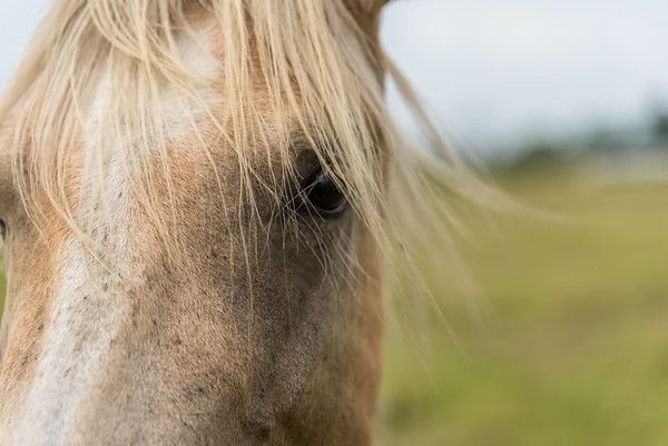 Horse and its mane