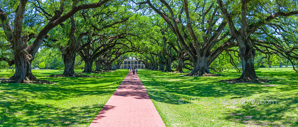 Oak Alley Plantation -Allée of Southern Live Oaks