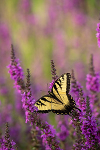 macro image of a butterfly on a flower