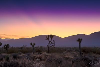 Mojave Nights
