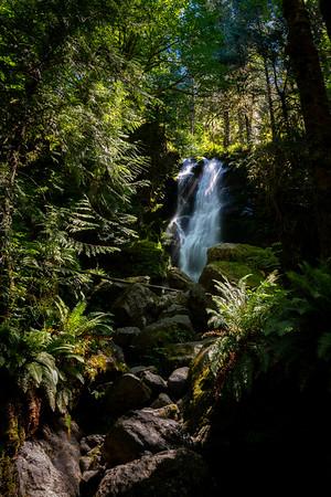 view up merriman waterfall in quinault rainforest