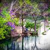 The Proposal, Neff Point, Lady Bird Lake, Austin