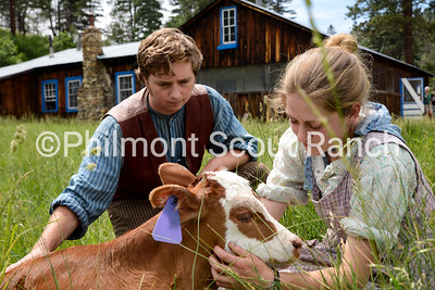 Peter Lampley and Anna Washburne pet the calf that was born at the beginning of the summer.  Alex Cenci/PhilNews