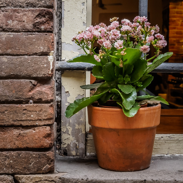 Pot on a Sill, Lucca, Italy - 2018