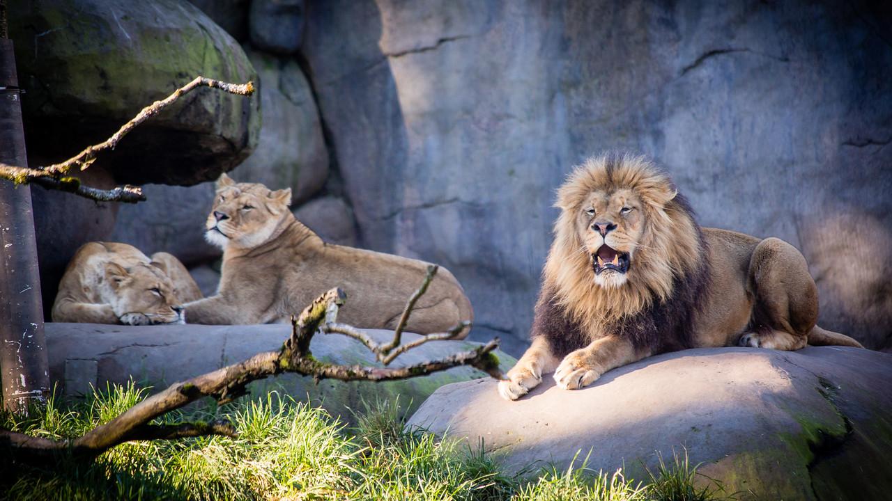 nevermind the ladies week 1: portland zoo