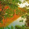Town Lake 6_30_2012 #3