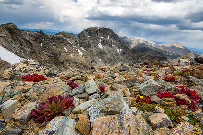 Arapaho Peak Red