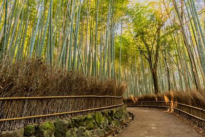 Bamboo Forest in Arashiyama.