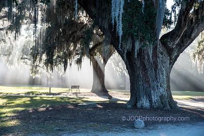 Boone Hall Plantation - Crepuscular Rays