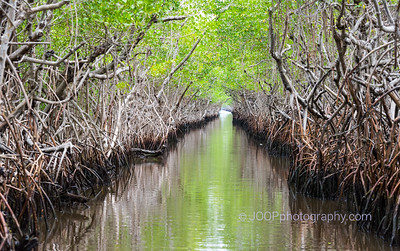 Everglades Mangroves & Wetlands