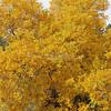 Autumn Color_SS4090