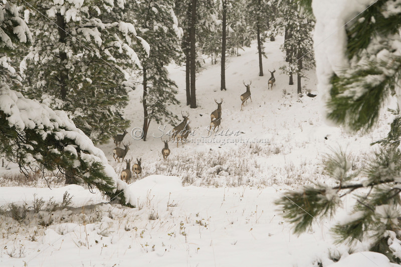 First Snow_SS4873