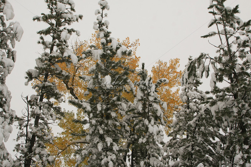 First Snow_SS4860