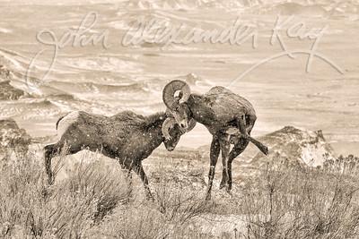 Prehistoric Battle - Badlands National Park