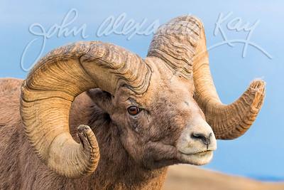 In Your Face - Badlands National Park