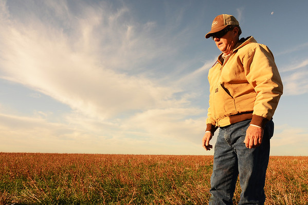 Tommy Henderson started no-till farming his dryland wheat crops three years ago. The Clay County, Texas farmer added a cover crop to his soil health program this year and that has increased his crop's drought hardiness.