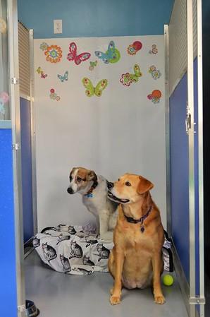 Best Pals Pet Resort