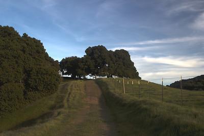 p 2522-4 road to trees - Paolo Scoglio