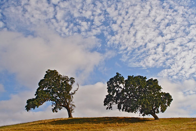 p IMG_1479 two trees with clouds 3 ADJ