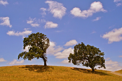p IMG_1195 two trees summer ADJ