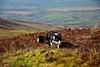 Shep on the Knockanroe Wood Loop walk. Sat 03.04.21