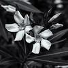 Flower Opus