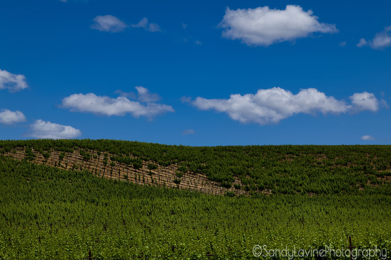 Clouds Over the Vineyard