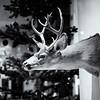 Deer in the Window