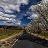 Trinchero Lane