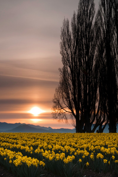 Skagit Valley Morning<br /> LaConnor, Washington