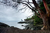 Lime Kiln Lighthouse with Madrone Tree<br /> Lime Kiln State Park, WA