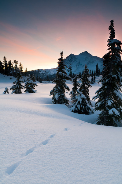 Tracks in the Snow<br /> Mt. Baker National Forest