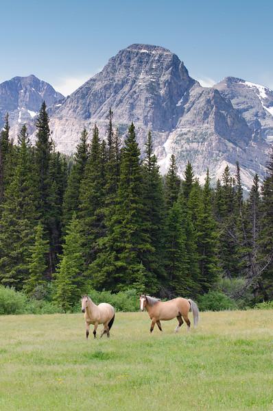 Open Range<br /> Glacier National Park, Montana