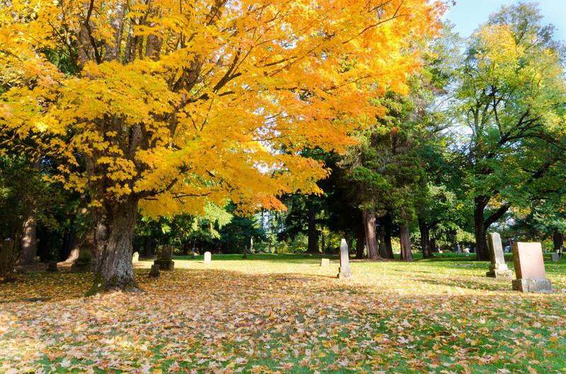 Fall Cemetery<br /> Bellingham, WA