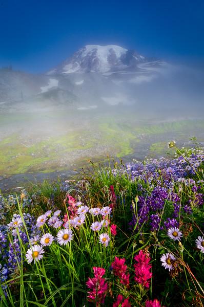 Summer Morning at Mt. Rainier