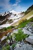 Mt Baker from Ptarmigan Ridge