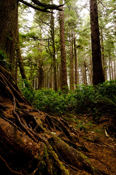 Roots<br /> Olympic National Park