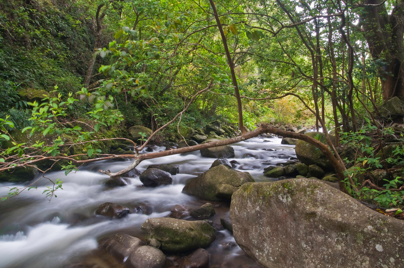 Iao Valley Stream<br /> Maui