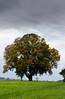 Cloudy Autumn Day<br /> Whatcom County, WA