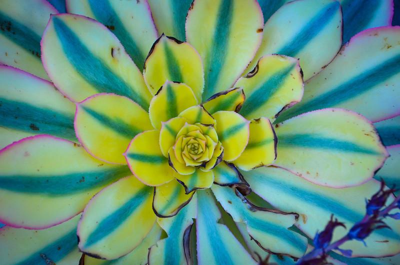 Ocean Plant Bloom