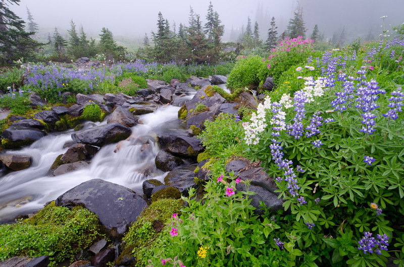Misty Morning Stream<br /> Mt. Rainier National Park